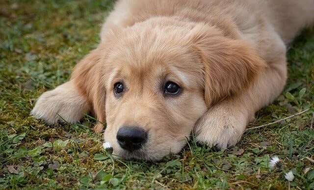 注意点(2) 永久歯に生え替わってから1年以内の犬にあげちゃダメ